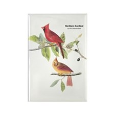 Audubon Northern Cardinal Bird Rectangle Magnet