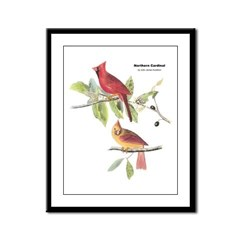 Audubon Northern Cardinal Bird Framed Panel Print