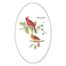 Audubon Northern Cardinal Bird Oval Decal