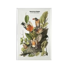 Audubon American Robin Birds Rectangle Magnet