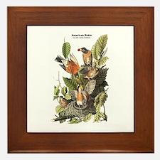 Audubon American Robin Birds Framed Tile