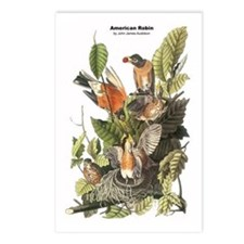 Audubon American Robin Birds Postcards (Package of
