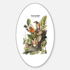 Audubon American Robin Birds Oval Decal