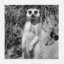 Meerkat Looking Forward Tile Coaster