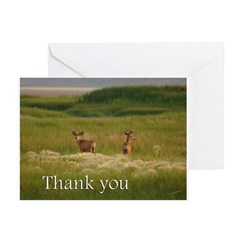 Bucks Greeting Cards (Pk of 10)