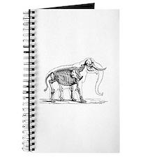 Elephant Anatomy Journal