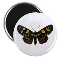 Multicolored Agarista Magnet