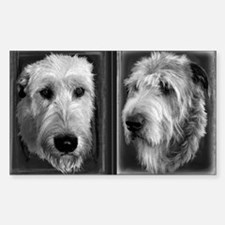 Irish Wolfhound B&W Head Study (Rectangular)