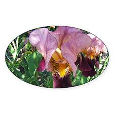 Dutch Iris Decal