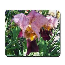 Dutch Iris Mousepad
