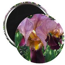 Dutch Iris Magnet