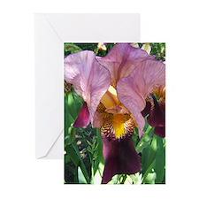 Dutch Iris Greeting Cards (Pk of 10)