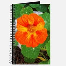 Orange Nasturtium Journal