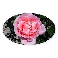Pink Rose Decal