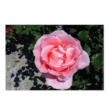 Pink Rose Postcards (Package of 8)