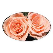 Peach Roses Decal