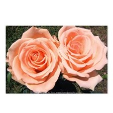 Peach Roses Postcards (Package of 8)