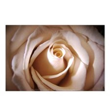 Ivory Rose Postcards (Package of 8)