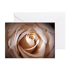 Ivory Rose Greeting Cards (Pk of 10)