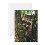 Baby Raccoon Greeting Cards (Pk of 10)