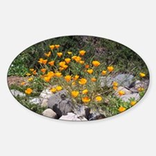California Poppies Oval Decal