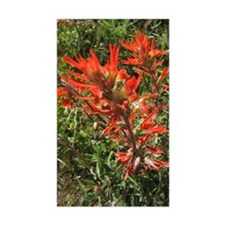 Indian Paintbrush Flower Rectangle Decal
