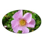 California Wild Rose Oval Sticker
