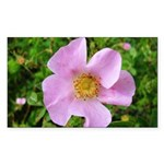 California Wild Rose Rectangle Sticker