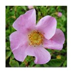 California Wild Rose Tile Coaster