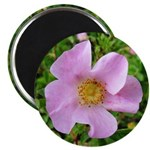 California Wild Rose Magnet