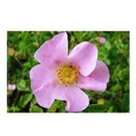 California Wild Rose Postcards (Package of 8)
