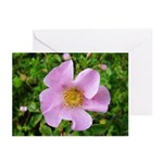 California Wild Rose Greeting Cards (Pk of 10)