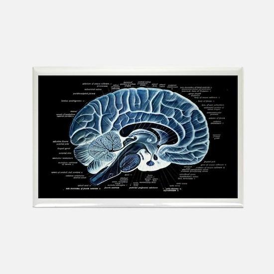 Human Brain Rectangle Magnet