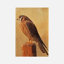 American Kestrel Rectangle Magnet