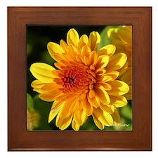 Golden Mum Framed Tile