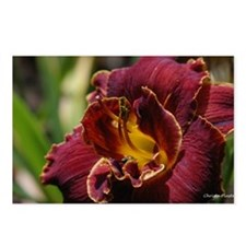 Island Knockout Lilly Postcards (Package of 8)