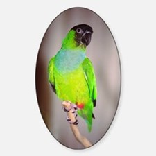 Nanday Conure Oval Decal