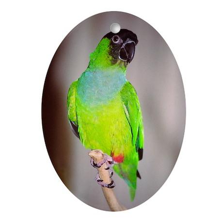 Nanday Conure Oval Ornament