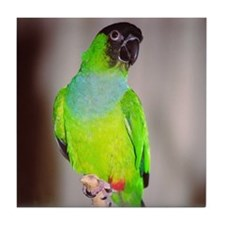 Nanday Conure Tile Coaster
