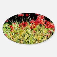 Flanders Poppies, Victoria Oval Decal