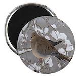 Winter Dove Magnet