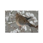 Winter Dove Rectangle Magnet
