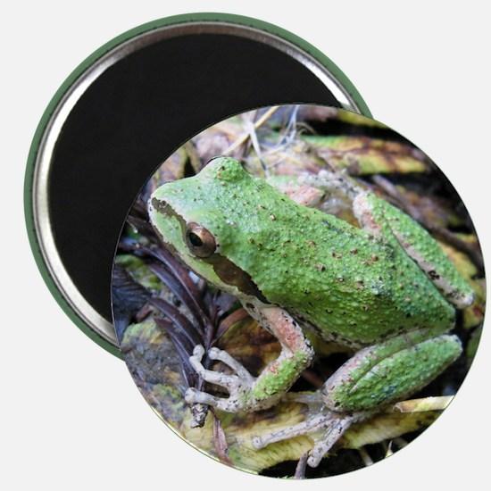 Pacific Chorus Frog Treefrog Magnet