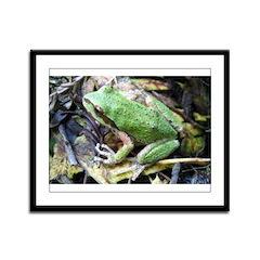 Pacific Chorus Frog Treefrog Framed Panel Print