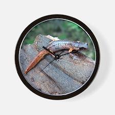 Ensatina Salamander Wall Clock