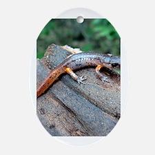 Ensatina Salamander Oval Ornament