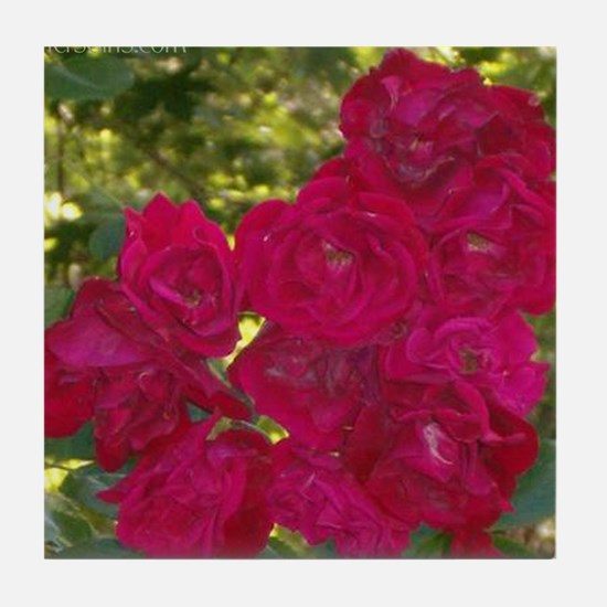 Red Climbing Roses Tile Coaster