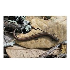 California Slender Salamander Postcards (Package o