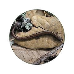 California Slender Salamander 3.5