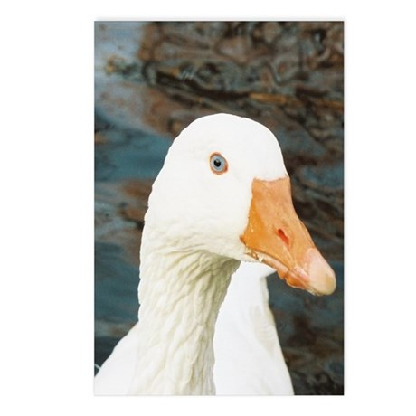 Blue-Eyed Duck Postcards (Package of 8)